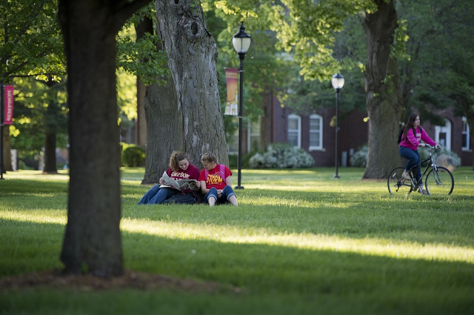 two students studying under tree on campus